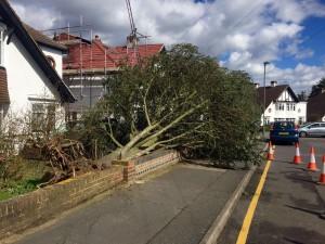 Emergency Tree Work - Fallen Tree