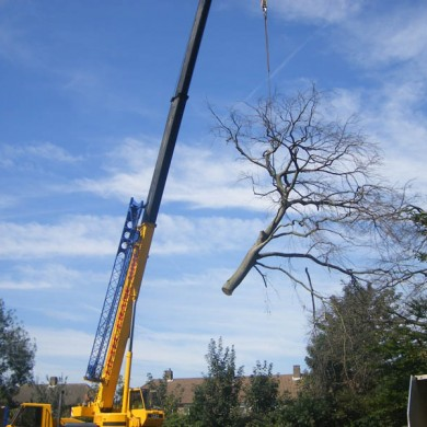 Bromley Tree Care