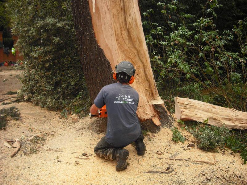 Beckenham Tree Care