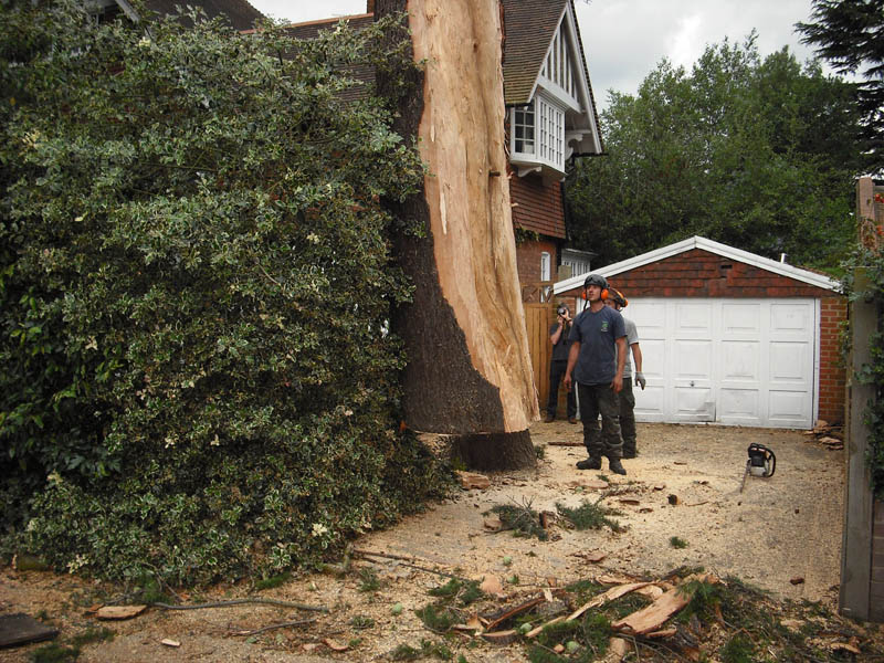 Sidcup Tree Care