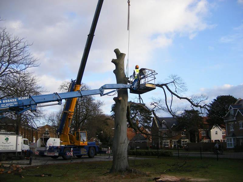 Orpington Tree Care