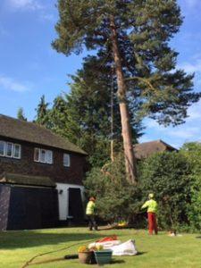 JJ&B Treecare Ltd