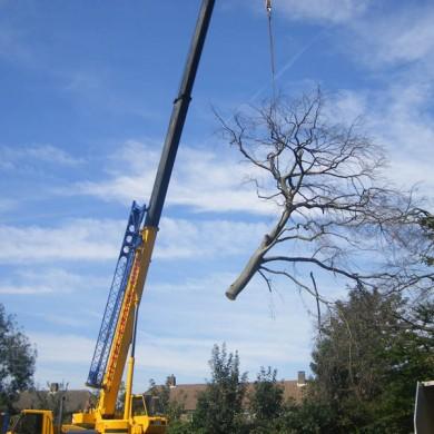 Bromley Tree Care
