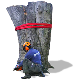 Tree Surgeon and Tree Stump